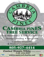 CB Pine Tree QP CDG 2020.jpg
