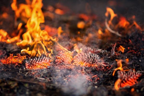 Prescribed burns SLO County