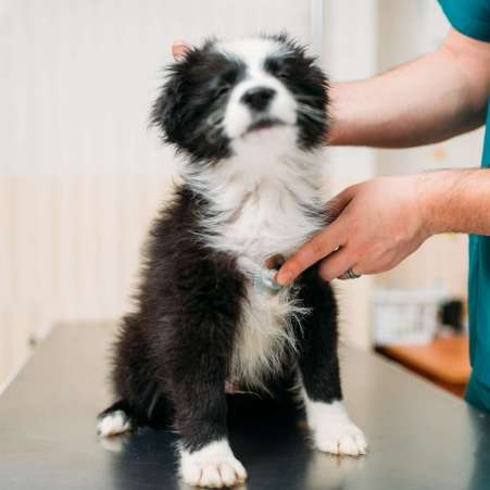 Male veterinarian examining dog, veterinary clinic. Vet doctor, treatment a sick dog