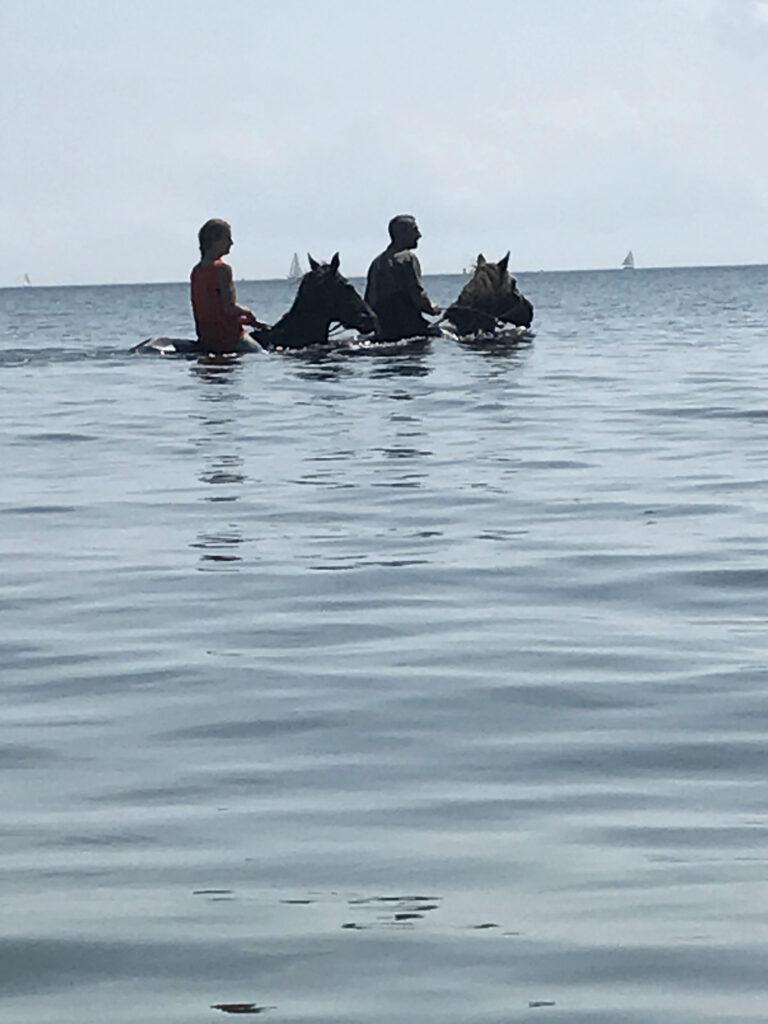 Provincetown Seahorses