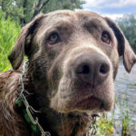 Olive Oscar Therapy Dogs - Louisville, CO Counselor