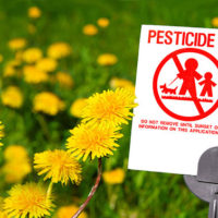 Flowers hurt bees if bees visit them when they're sprayed with pesiticdes
