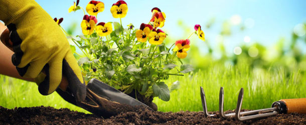 Planting flowers helps to create a more colorful world and a healthy bee habitat