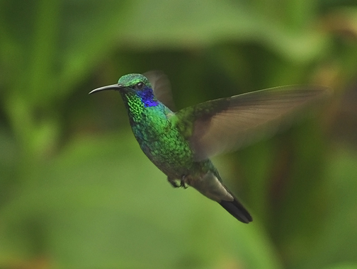 WEB-HummingBird