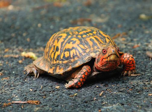 WEB-TurtleBox