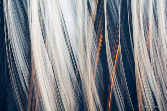 Behold (Intentional Camera Movement)