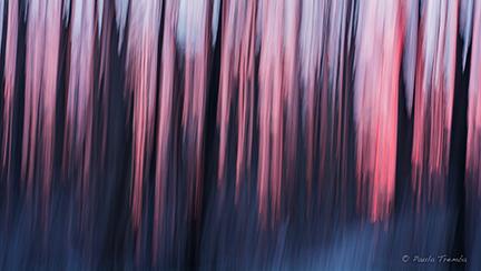 Winter Dream (Intentional Camera Movement)