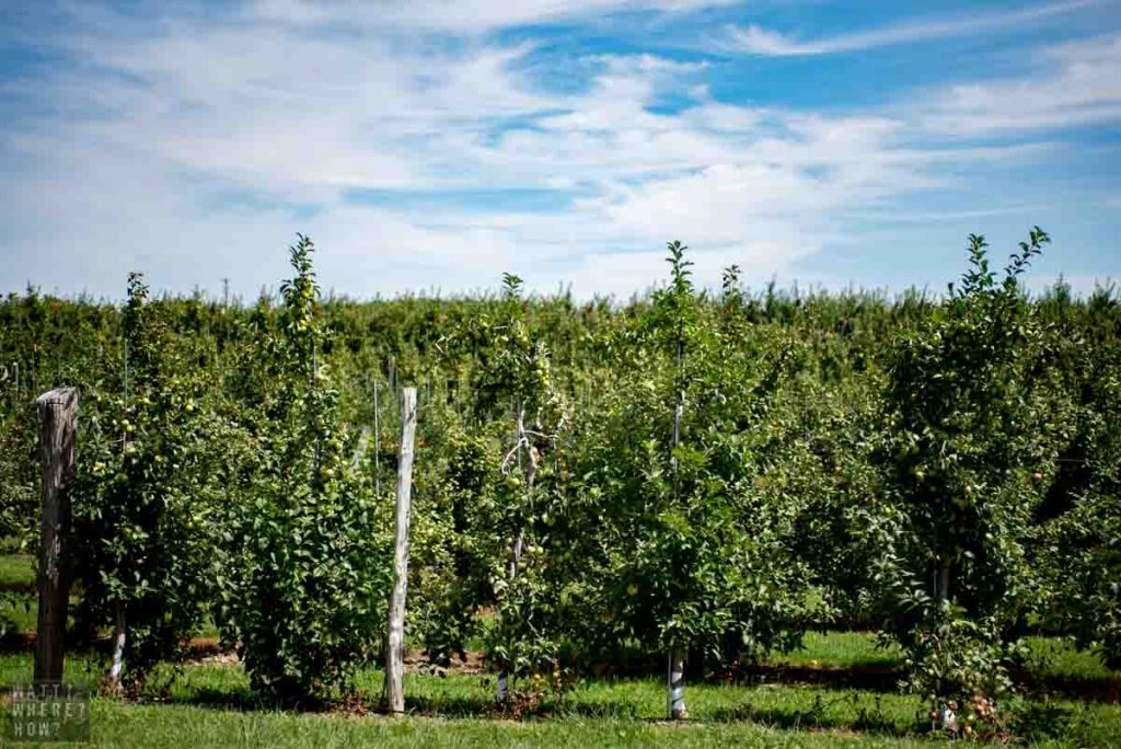 A great place to go peach picking in the Catskills is Boehm Farm.