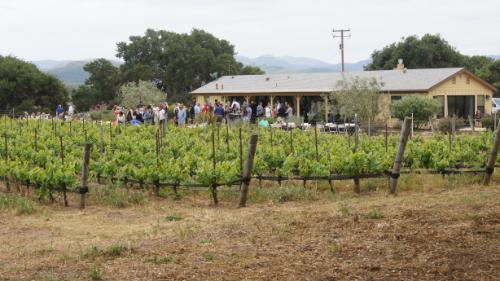 Dragonette Pick-Up Party at Duvarita Vineyards