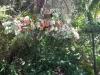 photo-aug-18-1-02-35-pm-web