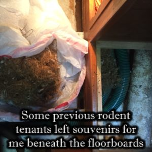 Gifts from rodents under Puffin's floorboards