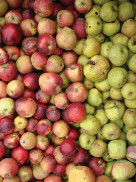 cider-heirloom-apples