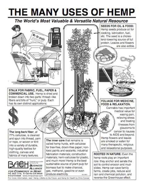 BACH flyer diagram plant