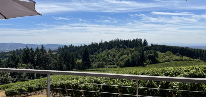 View from Lange winery