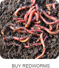 buy-redworms