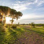 Winery at Fattoria di Fiorano