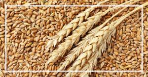blog-header-2-grain