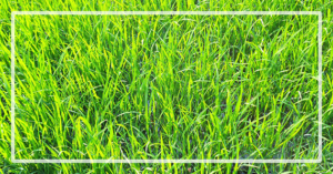 blog-header-2-grass