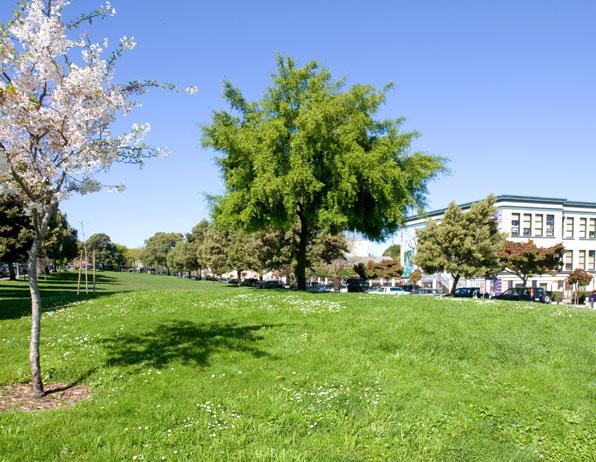 Precita Park Lawn