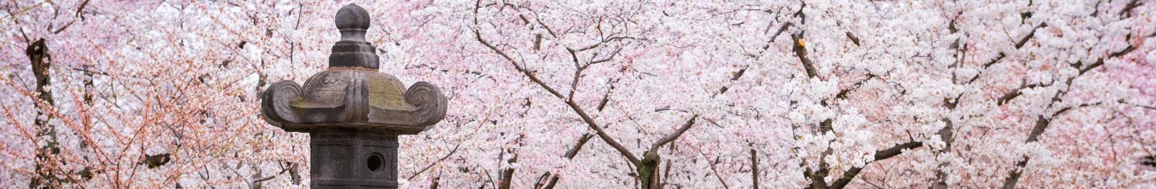 Mrs. Taft Plants a Tree: How the Cherry Blossoms Came to Washington