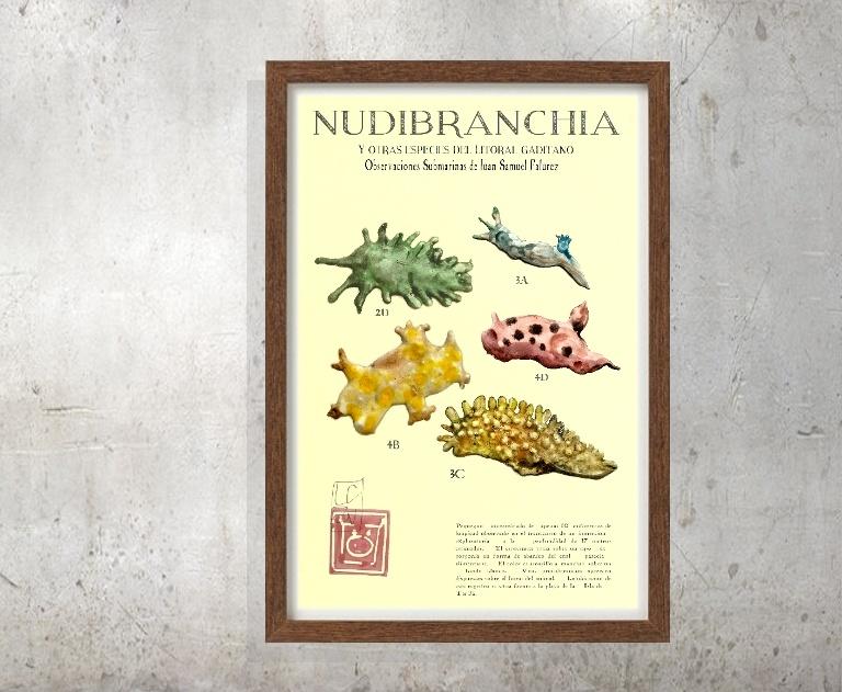 catalogo nudibranquios