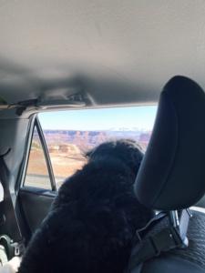 Driving through Canyonlands National Park
