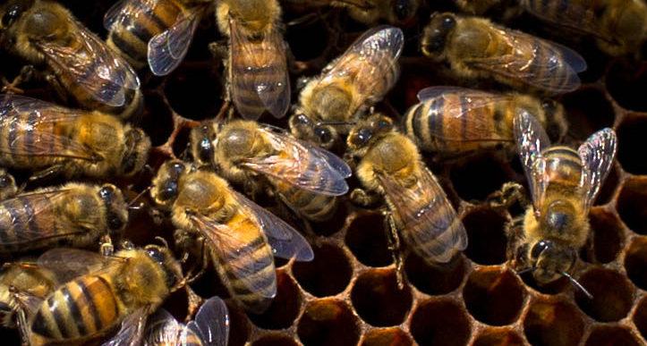 The Magic of Raw Honey