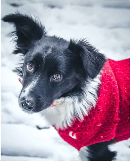 Cold Weather Pet Safety Tips