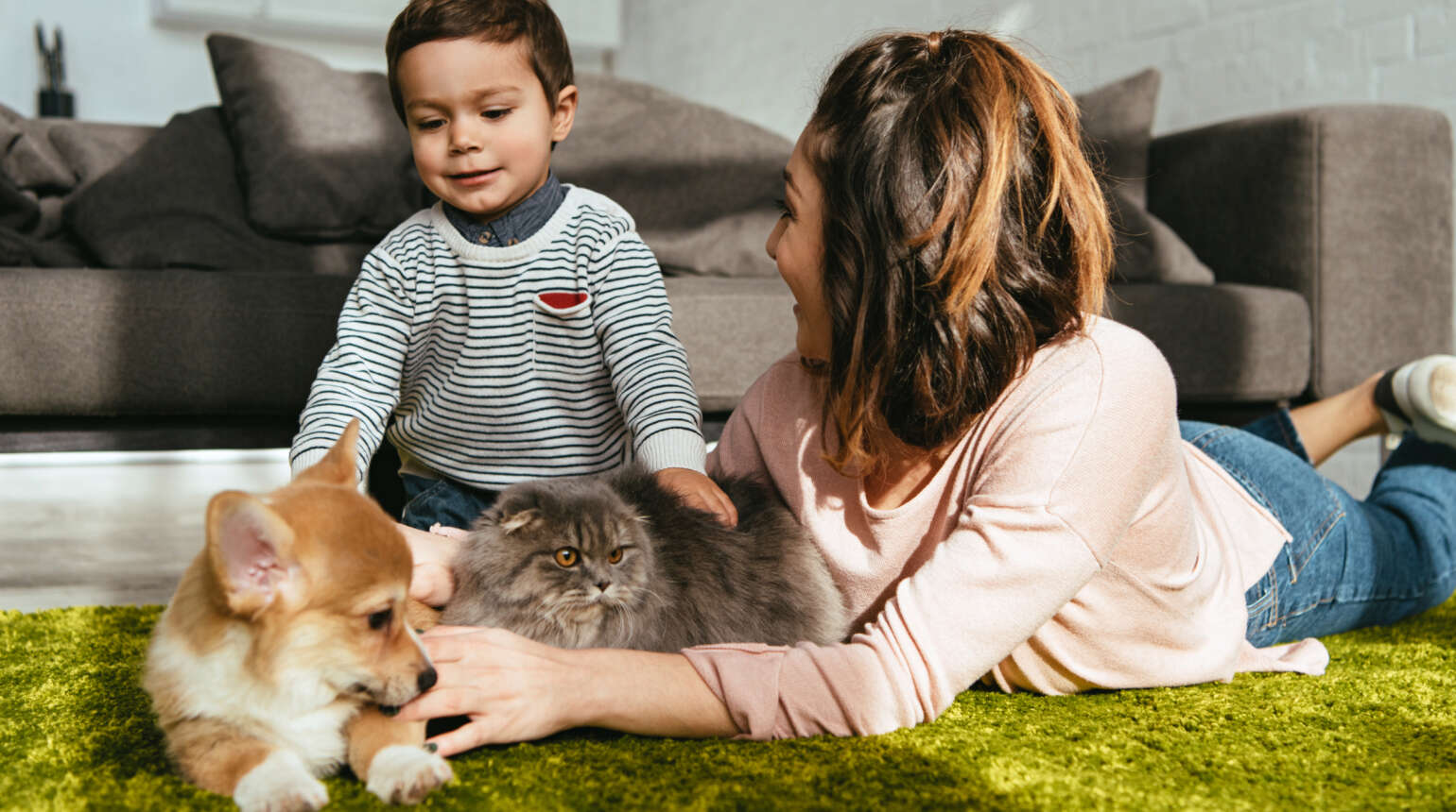 Getting Your Pet's Bloodwork