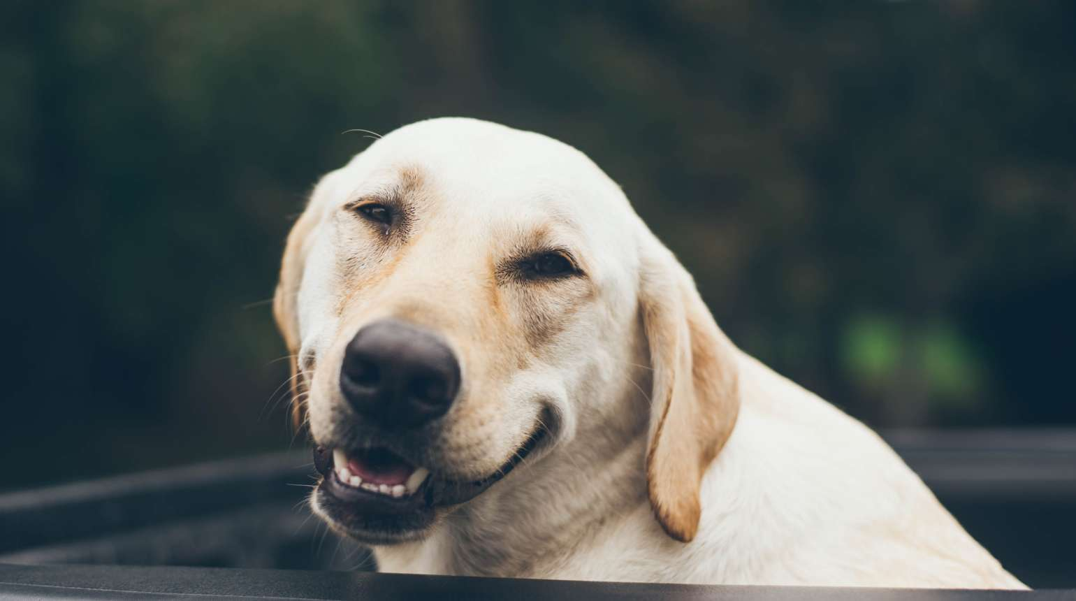 Protecting Your Pet's Dental Health