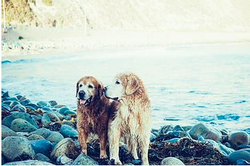 Summer Activities for Senior Dogs