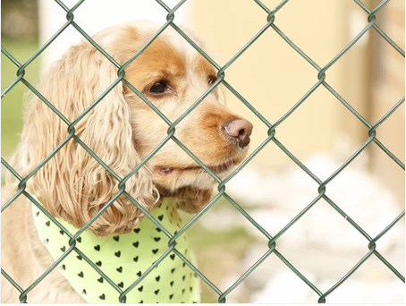Tips for Boarding a Dog with Separation Anxiety