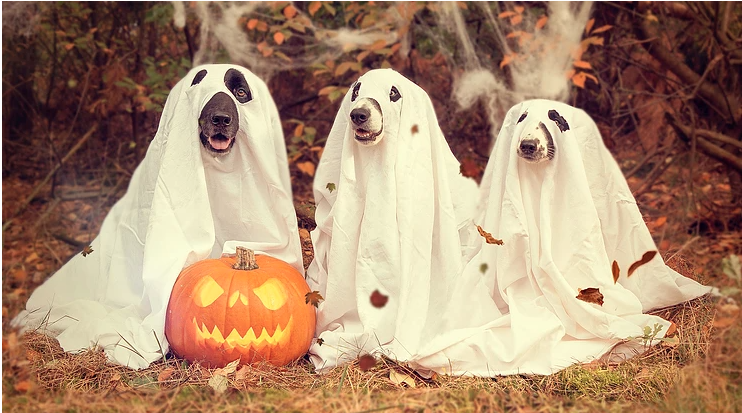 Trick or Treat? How Bad is Chocolate Actually For Your Dog?