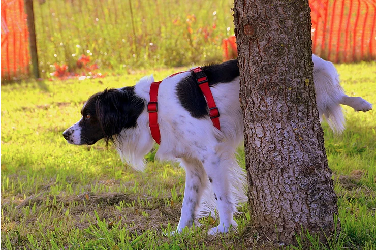 Is Your Dog's Urine Killing Your Grass?