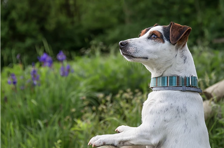 Protect Your Pets from the Tick-ing Time Bomb!