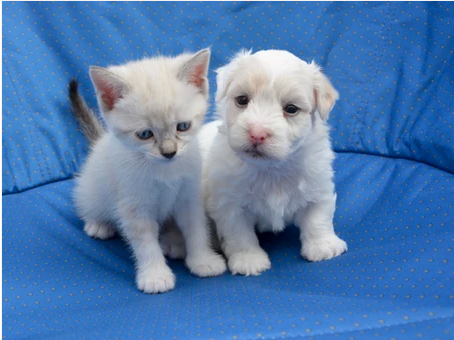 House Training Your New Puppy or Kitten