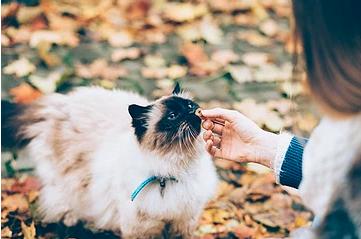 Keeping Your Pet Safe this Season
