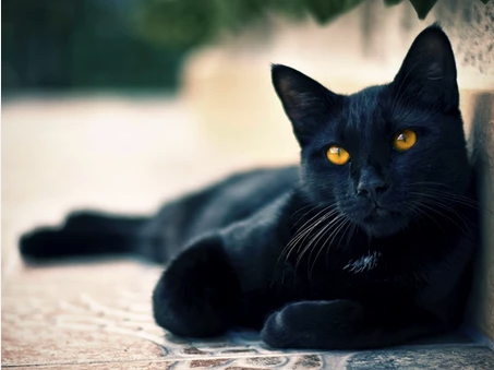 Black Cat Superstitions: The Good, The Bad, and The Mostly Nonsensical
