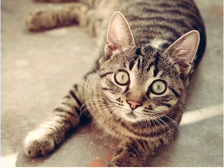 Why it's Important to Spay or Neuter Your Pet