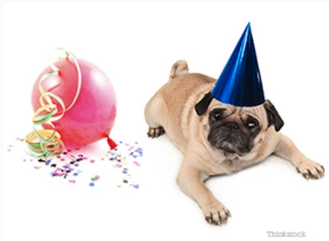 New Year's Resolutions For You & Your Pet