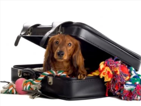 8 Tips To Follow When Boarding Your Dog