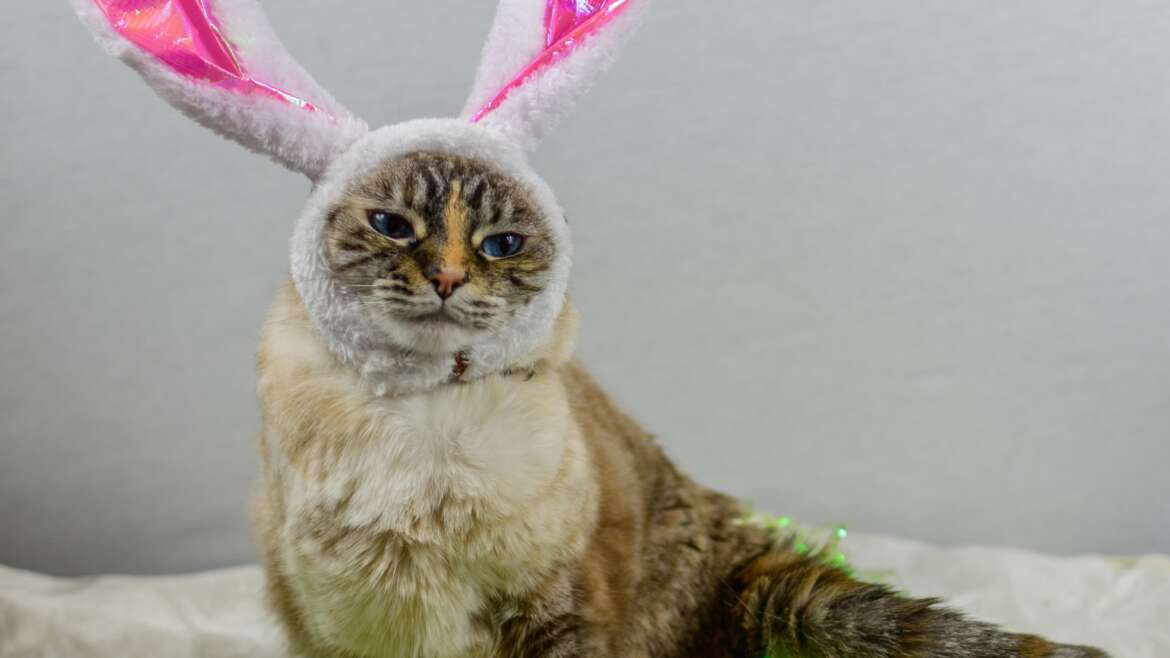 Watch Out for These Easter Pet Hazards!