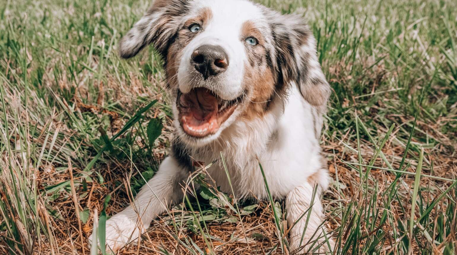 Signs of Lyme Disease in Dogs