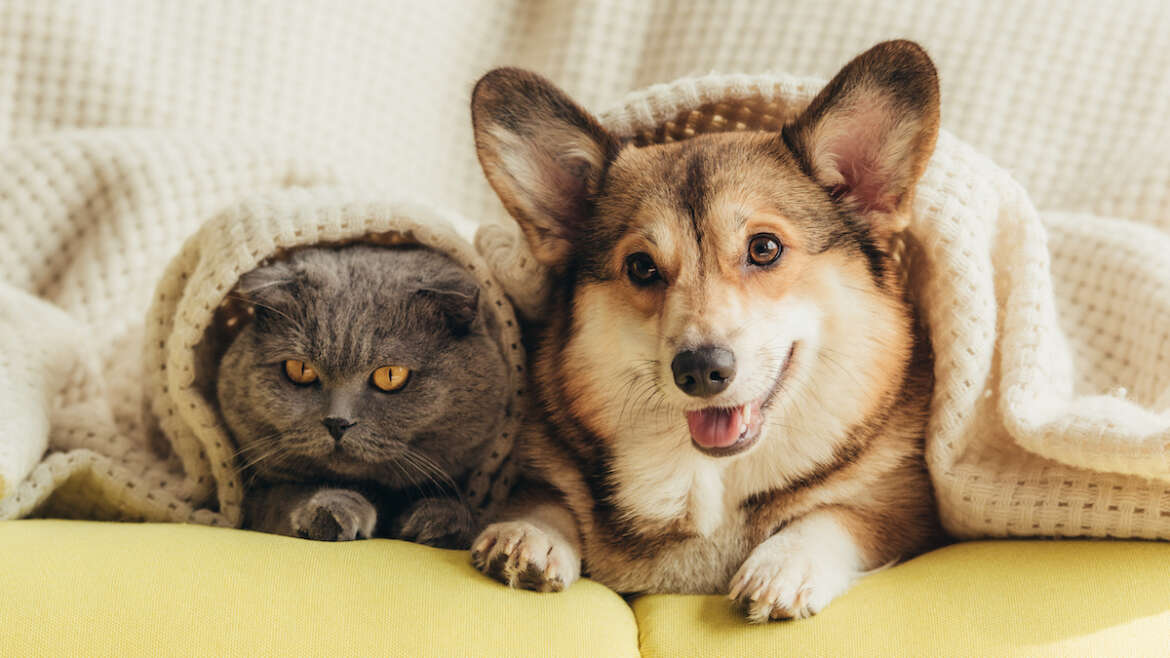 Is your pet microchipped?
