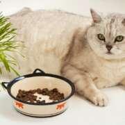 National Pet Obesity Awareness Month