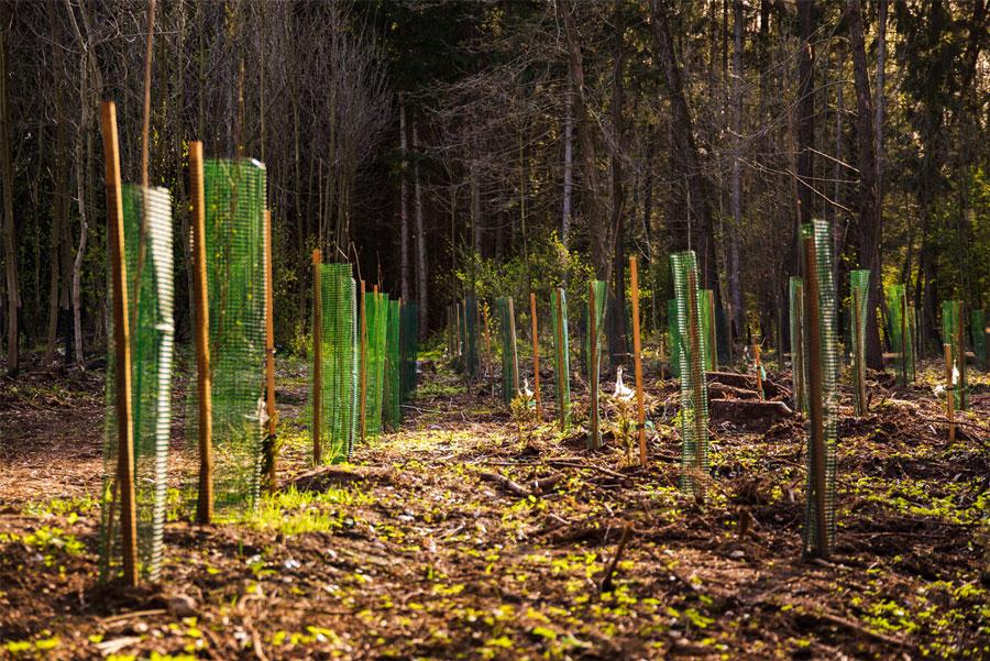 3-billion-trees-by-2030-green-deal