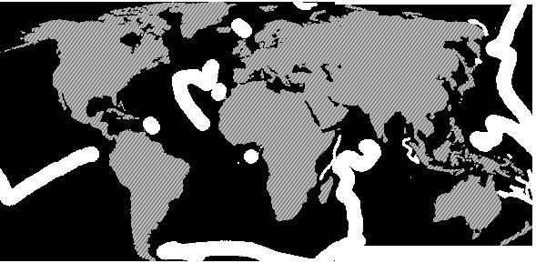 International Cap Sealing Systems