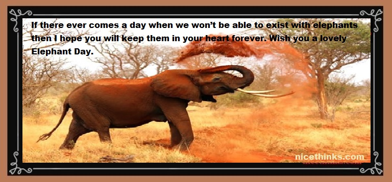 African elephant Day Quotes And Images