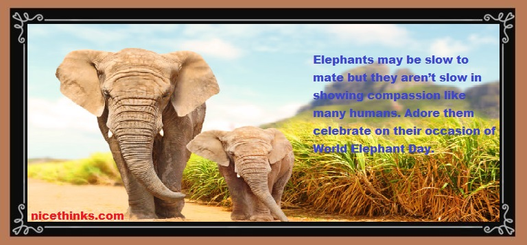 African elephant Quotes