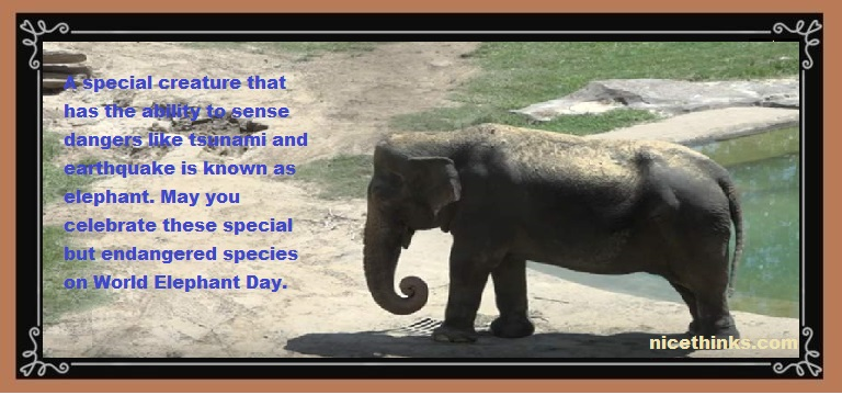 World Elephant Day Messages, Images